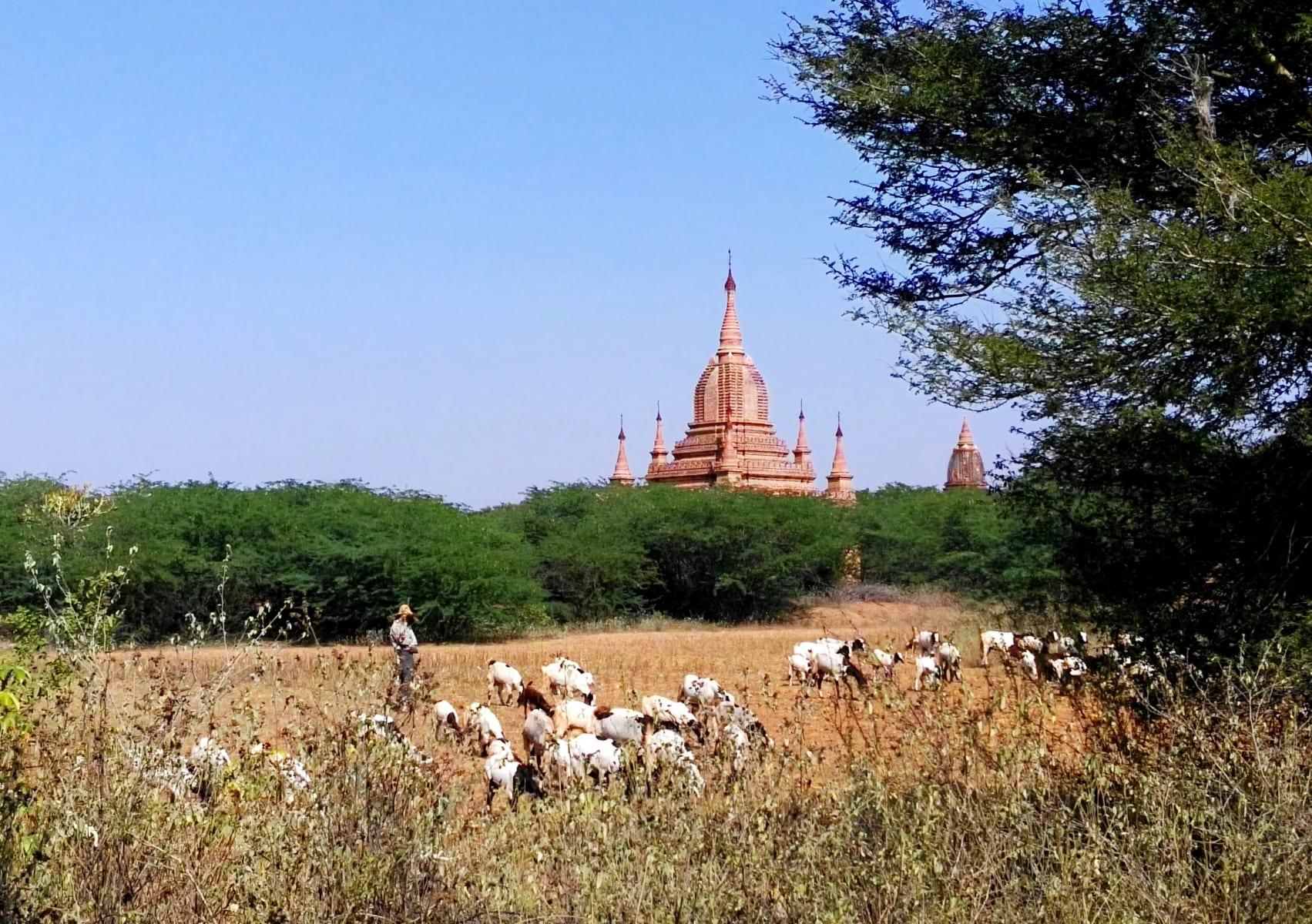 Mezi chrámy žijí lidé obyčejným životem, Bagan, Myanmar