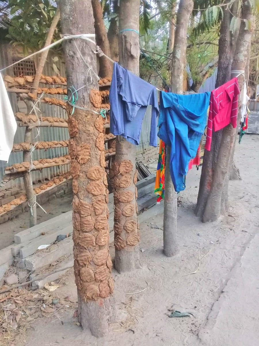 Sušení kravinců - všimněte si vtisku dlaně, Bangladéš