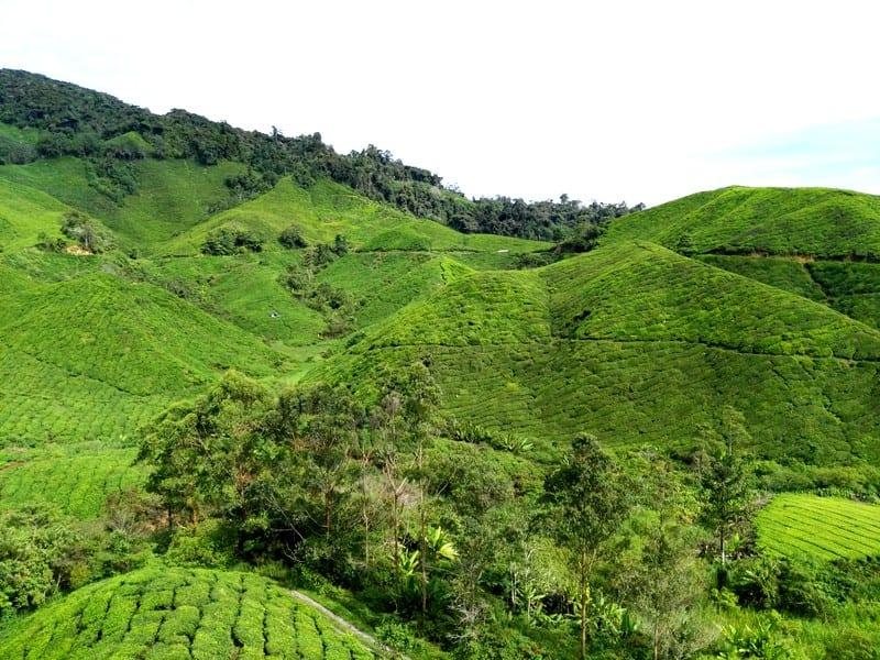Cameron Highlands, Malajsie