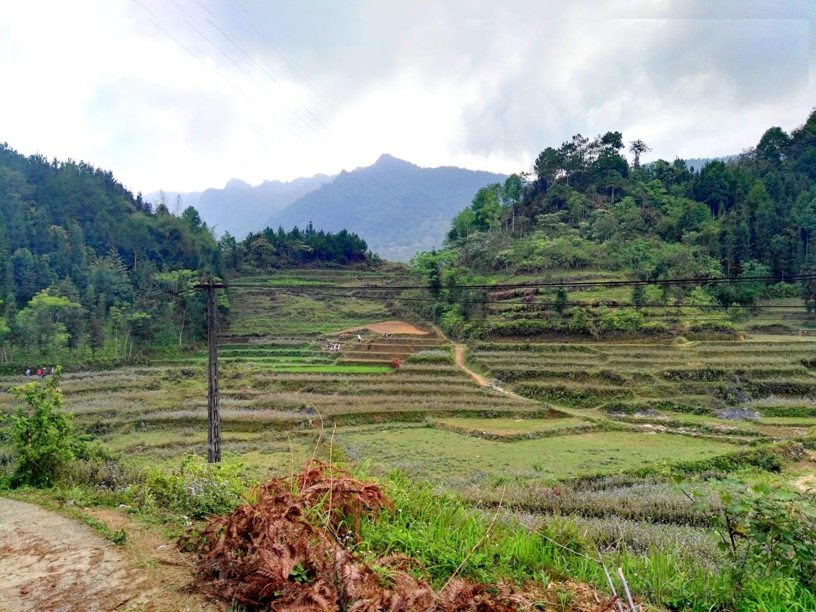 Oblast Quan Ba/Tam Son