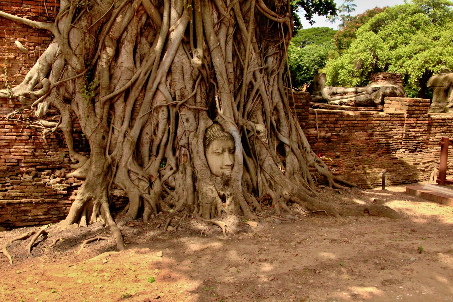 Hlava Buddhy v kořenech stromů, Ayutthaya,Thajsko