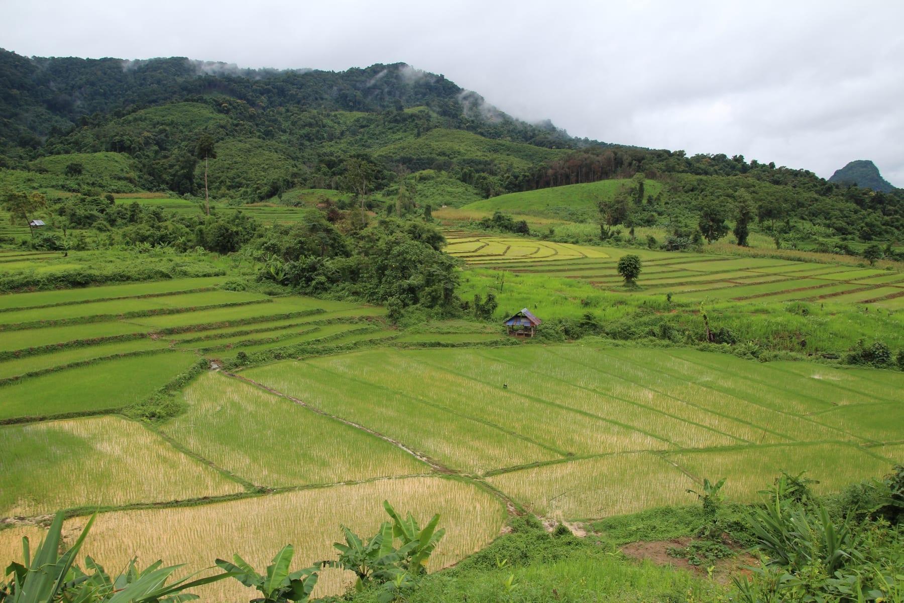 Mozaika rýžových polí v severním Laosu