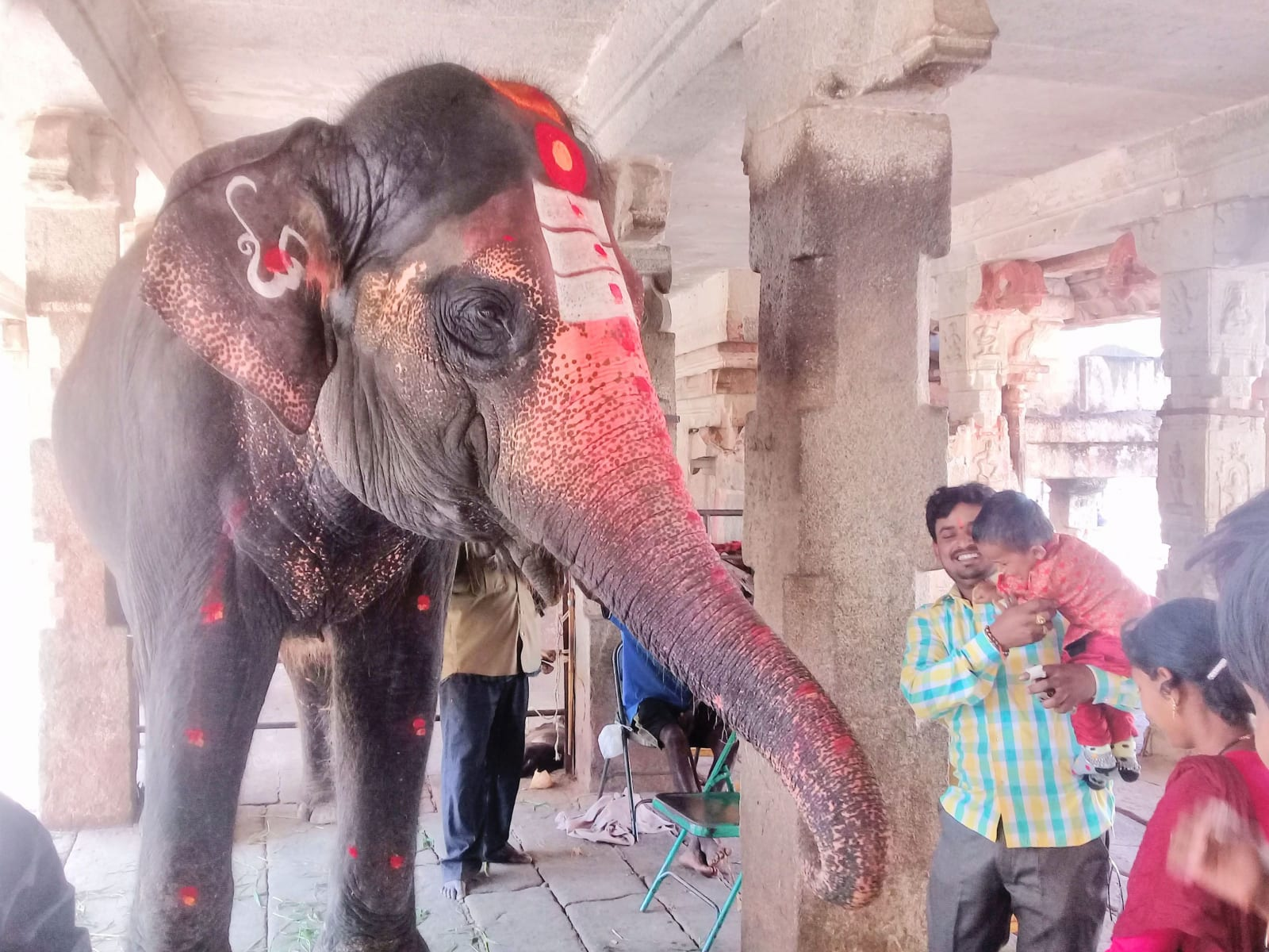 Slon Lakšmí (po hindské bohyni Lakšmí) v slavném chrámu Virupaksha, Hampi, Indie..