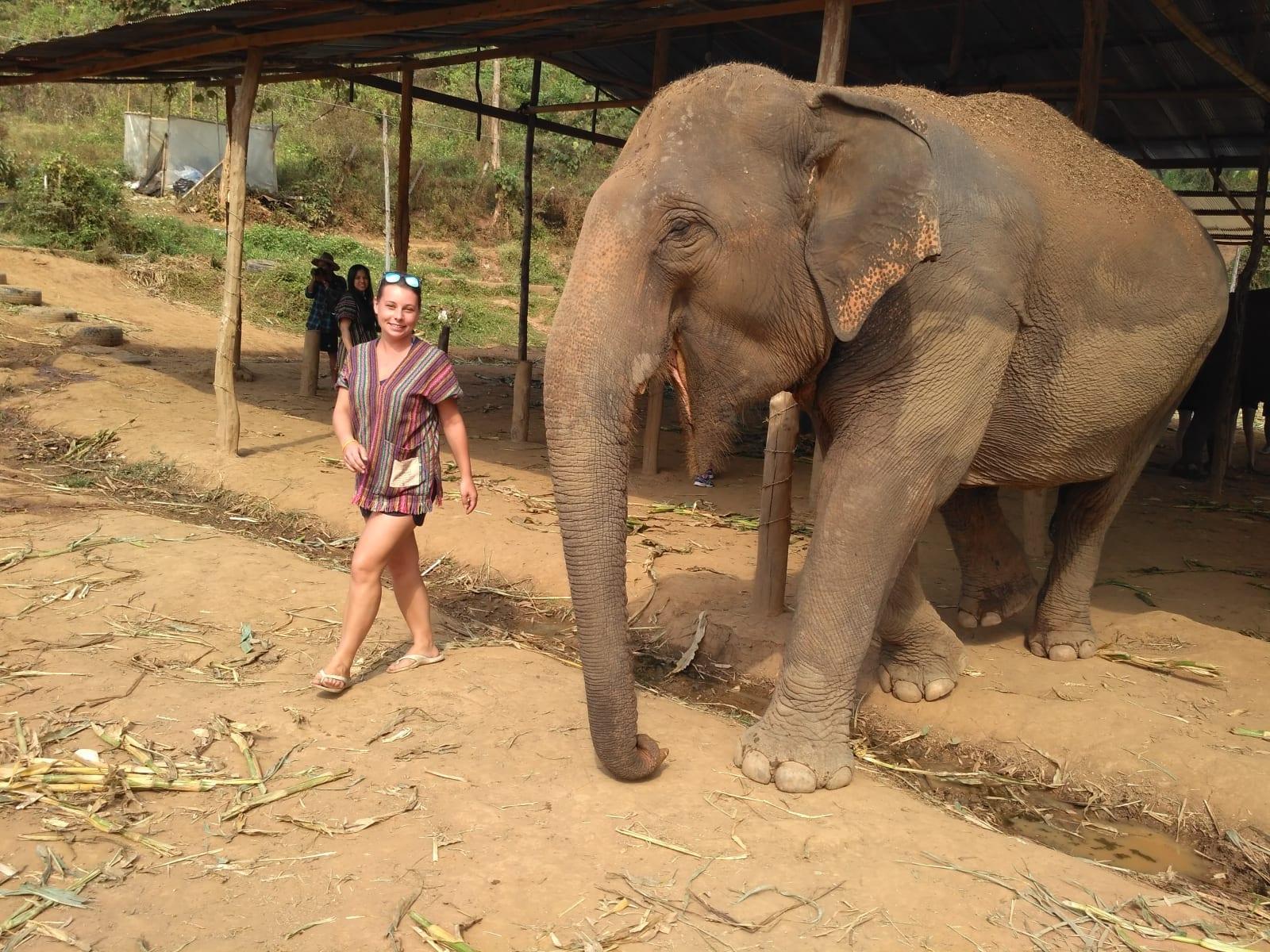 Sloní farma v Thajsku