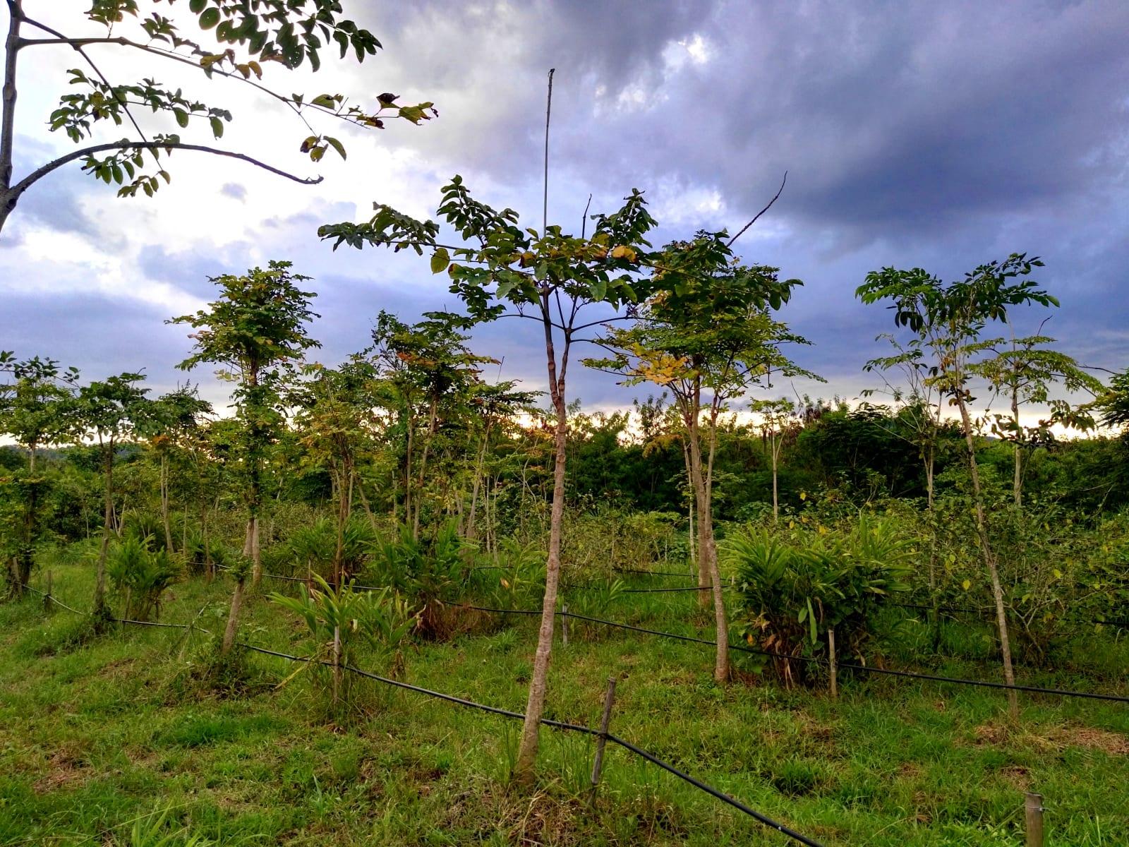 Nádherná příroda kolem The creek villa, Loei, Thajsko
