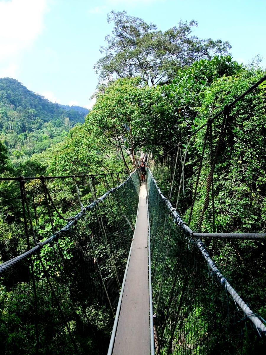 Canopy Walkway, Taman Negara, Malajsie