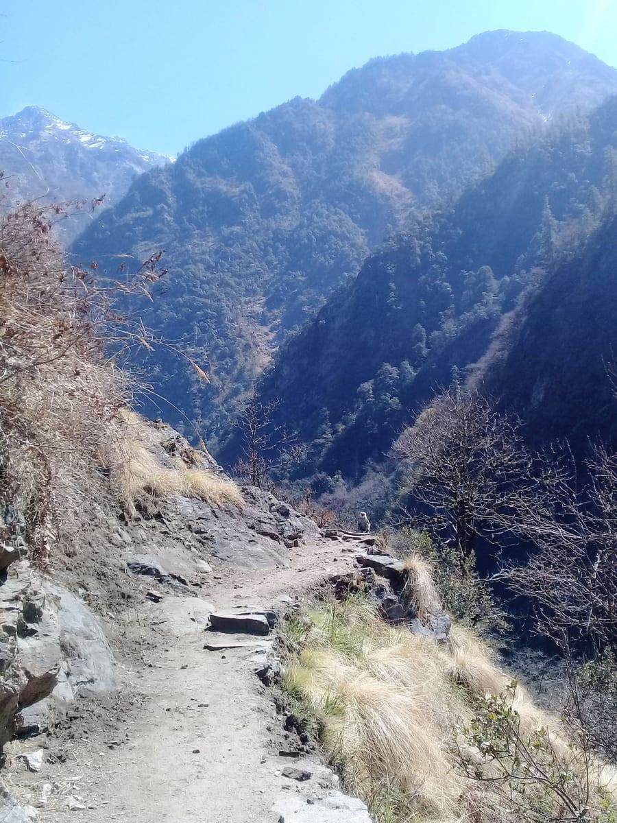 Šedý-nepálský-langur-na-cestě-přede-mnou-Nepál