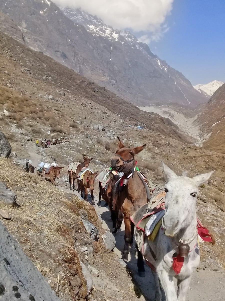 Konvoj mul, Nepál