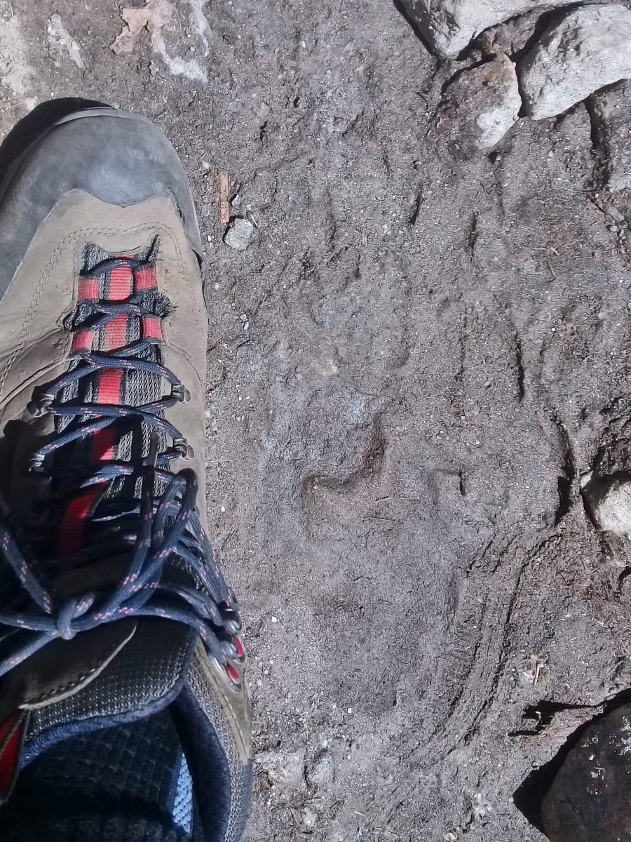 Medvědí stopa na cestě, Nepál