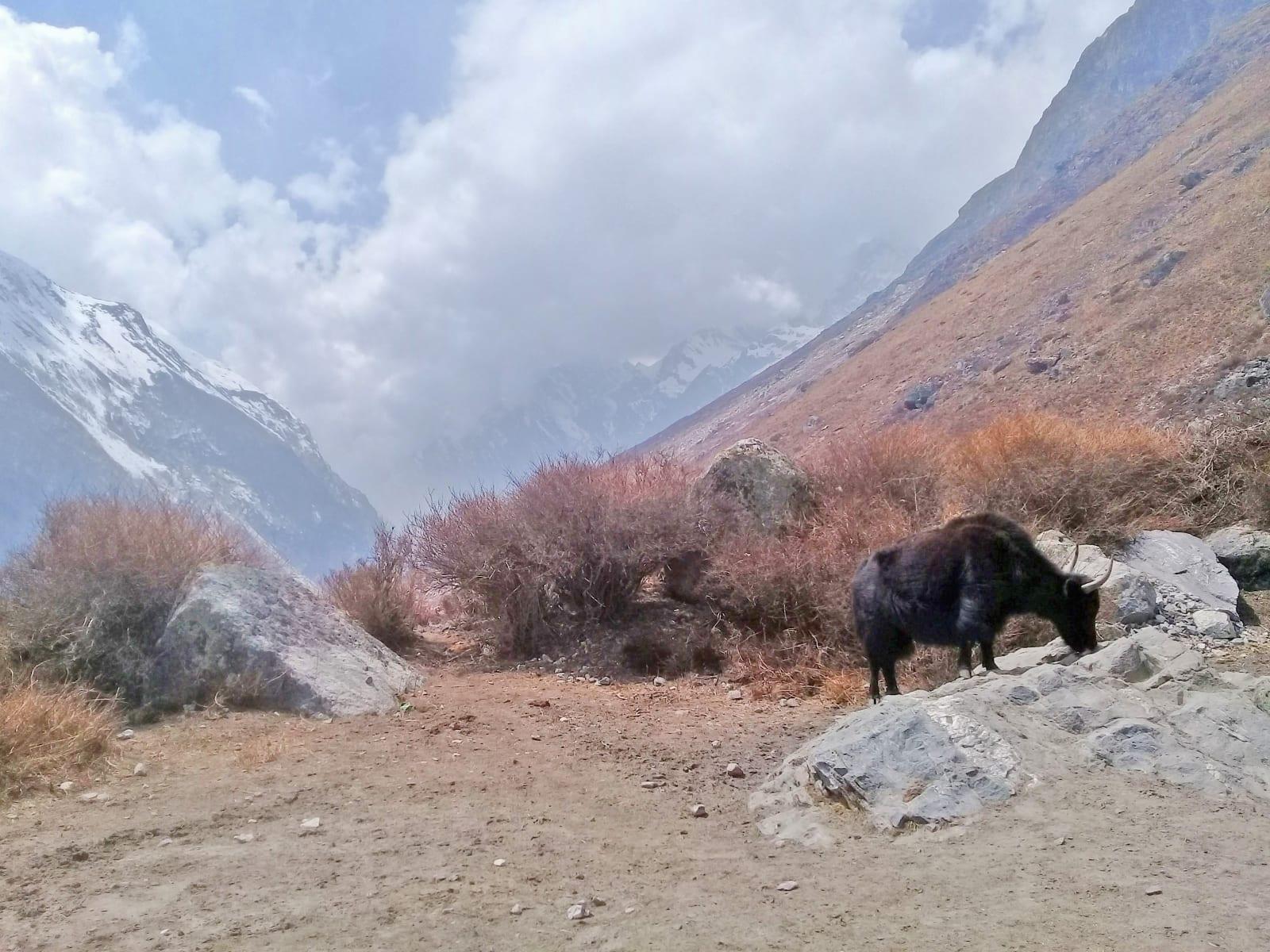 Osamělý-jak-Nepál