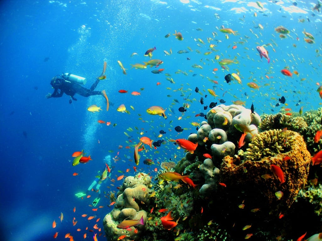 Perhentian islands jsou rájem potápěčů, Malajsie