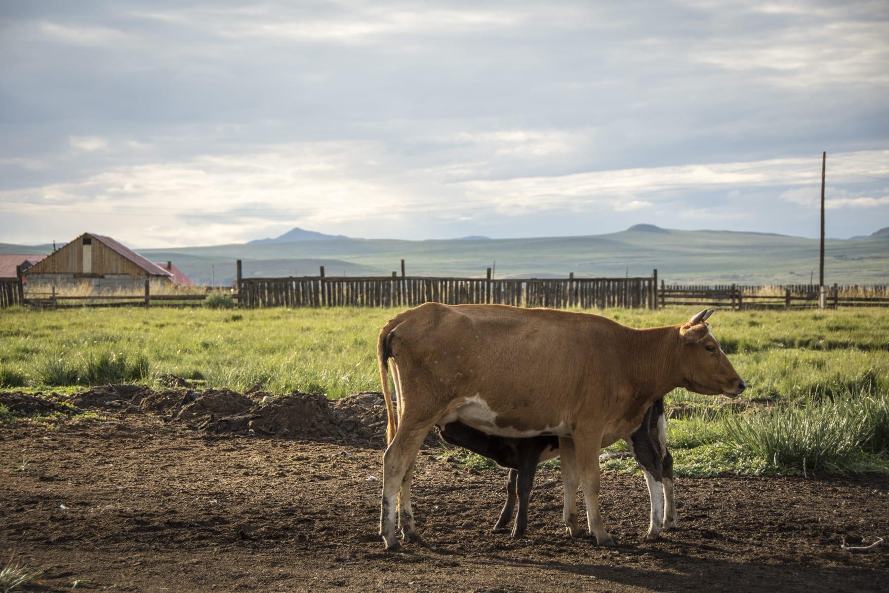 Orkhon, Mongolsko
