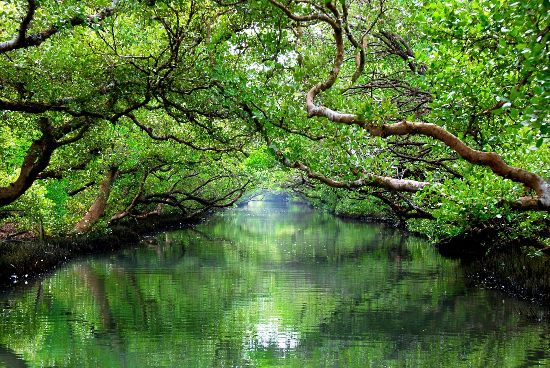 Mangrovníkový tunel v národním parku Taijiang