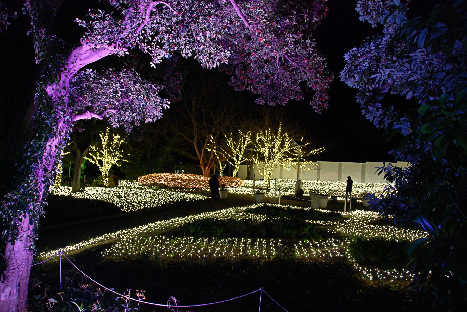 Winter Illuminations, Japonsko